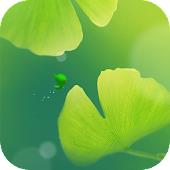 Green Apricot Leaf Wallpaper