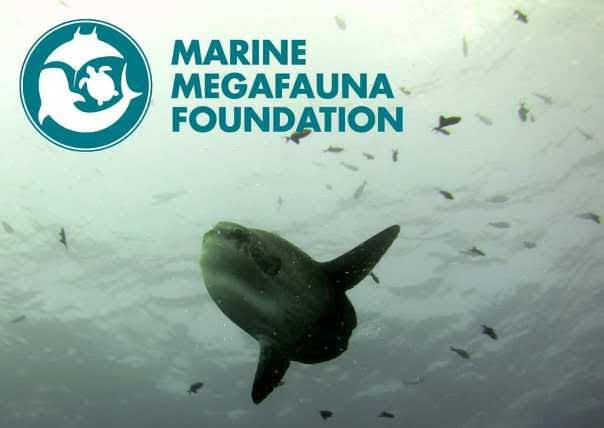 Marine Megafauna Foundation, Nusa Penida