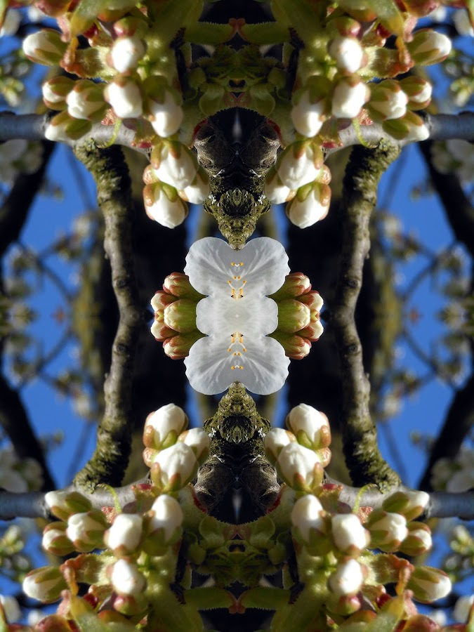 abstract nature by Paul Wante - Digital Art Abstract ( flowers, nature, abstract, photography, digital art )