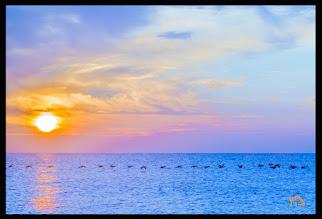 Photo: Wildgänse im Sonnenuntergang