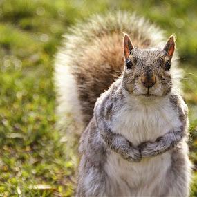Whats Up Pixotoers? by AsDigiClicks Photography - Animals Other ( squirell, boston commons, boston, chipmunk, pixoto )