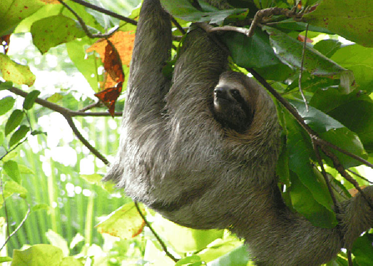 Photograph sloths and other wildlife on UnCruise Adventures'