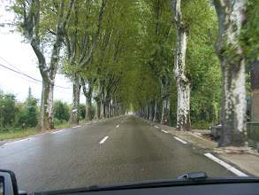 Photo: There are a number of French towns with attractive rows of plane (sycamore) trees on the entrance roads, as here in Pont-St-Esprit.