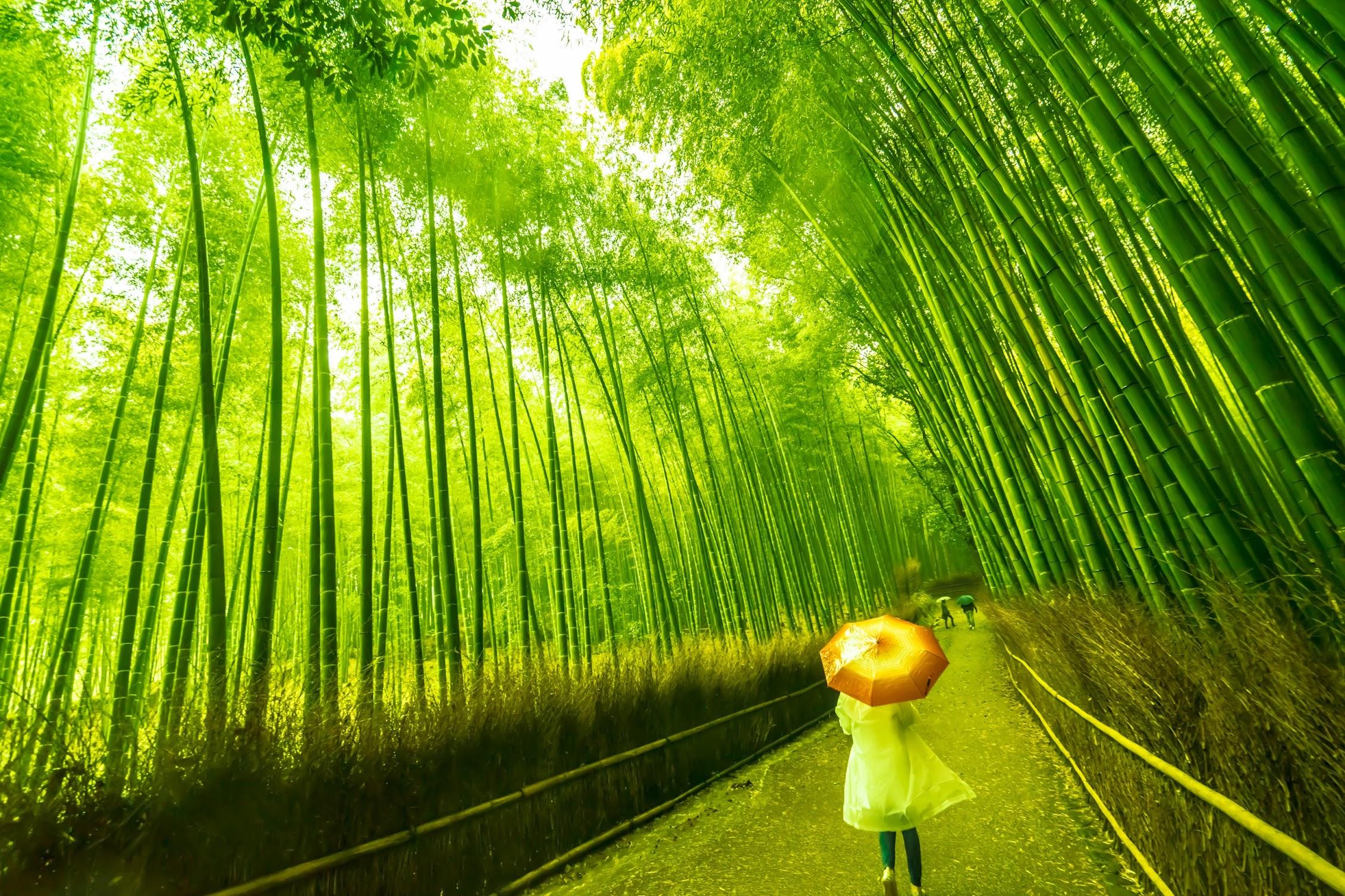 京都 竹林の道1