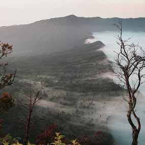 Misty Morning by Jayadi Salim - Landscapes Prairies, Meadows & Fields