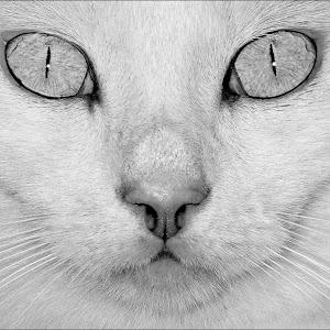Those eyes.jpg
