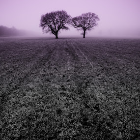Two Trees in a Field (in the Mist) by Jon Marshall - Landscapes Prairies, Meadows & Fields ( field, trees, mist )