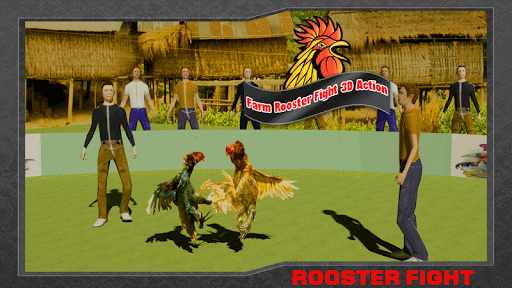 Farm Deadly Rooster Fighting