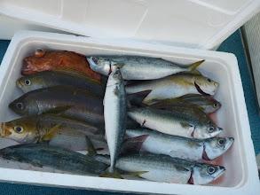 Photo: おおつさんの釣果です。