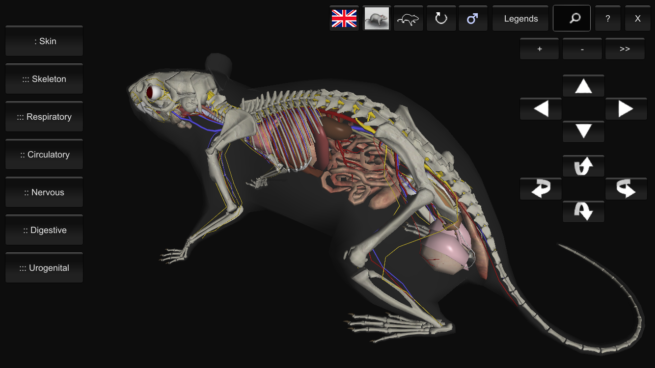 3d Rat Anatomy Android Apps On Google Play