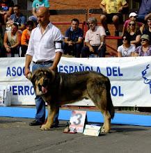 Photo: XXXII Monografica Nacional of Mastin espanol in Villablino