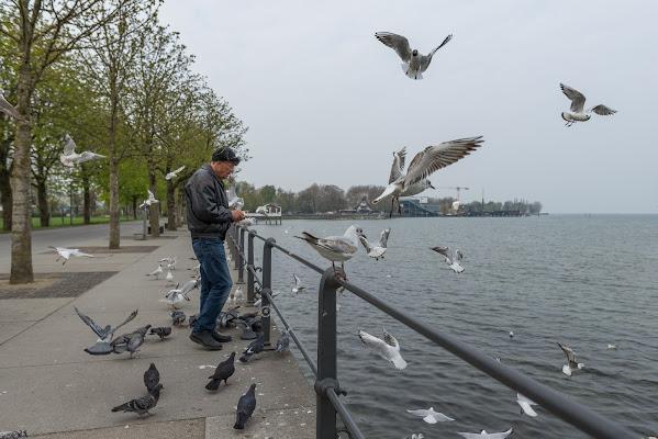 Bird feeding di thomas_gutschi