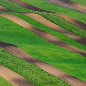 Ribbons by Jan Stupka - Landscapes Prairies, Meadows & Fields ( green field, plowed field, april, grass, czech republic, morning, landscape, spring, fields )