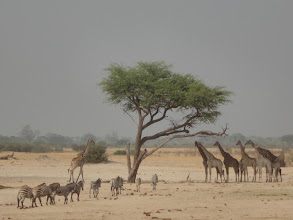 Photo: Poor thirsty animals