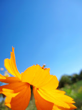 Photo: Orange flower petals against a blue sky at Cox Arboretum and Gardens in Dayton, Ohio.