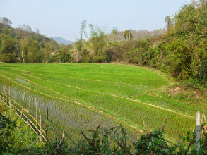 Photo: This is one of many rice paddies I saw.