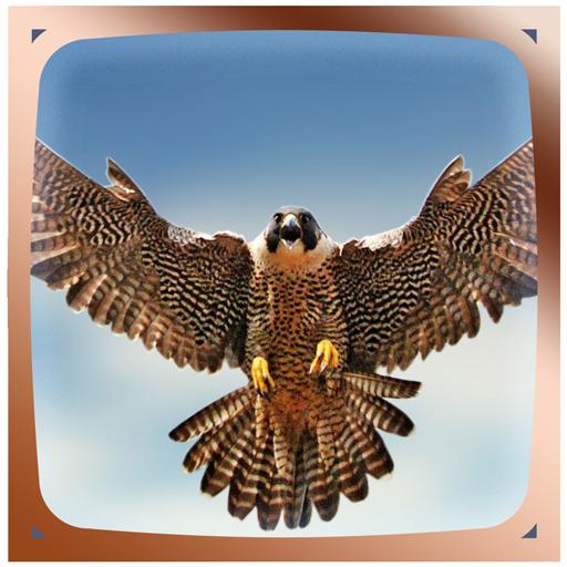 Falcon Live Wallpaper