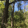 Abundance hollow tree