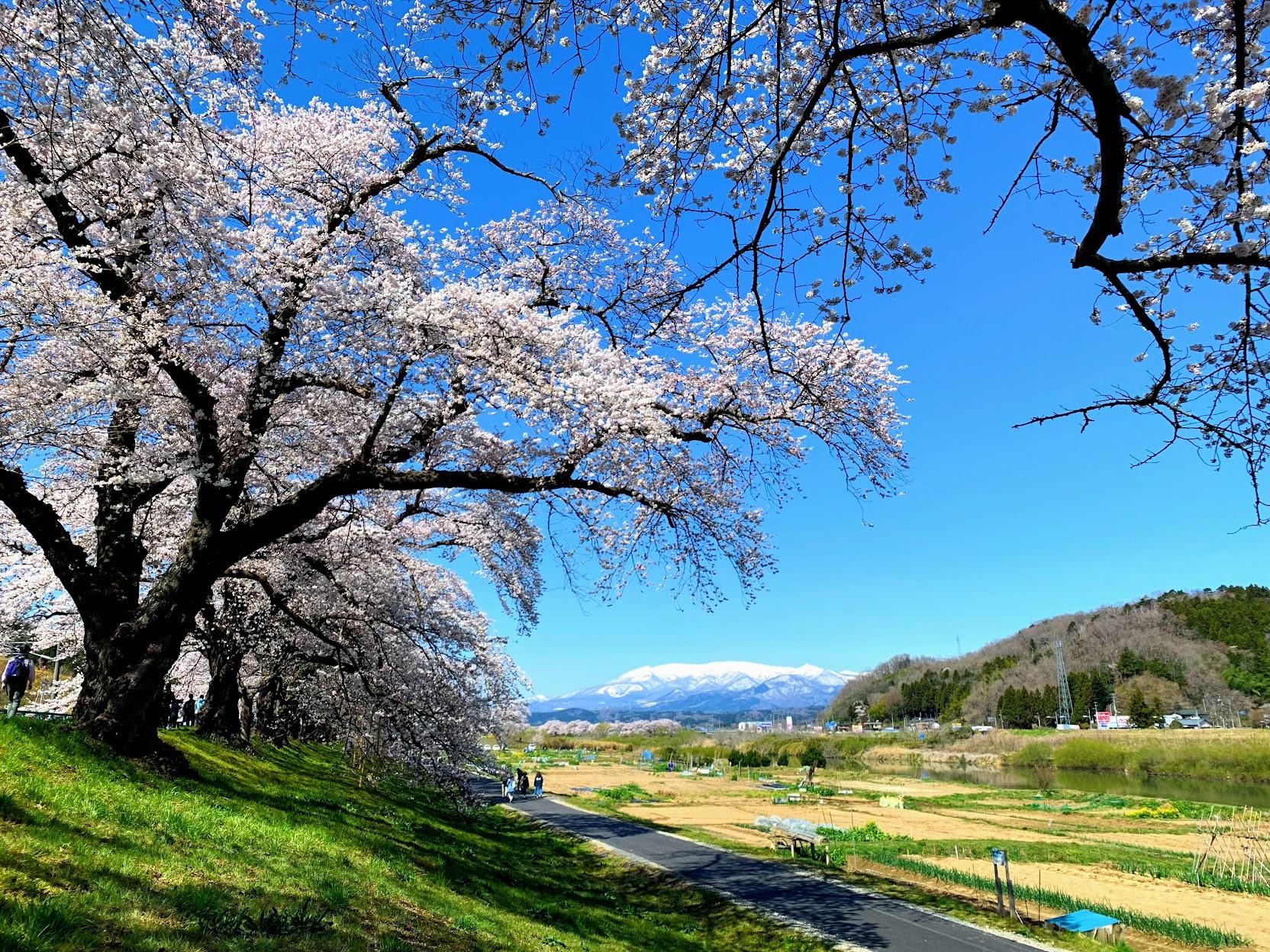 2019日本東北 – 仙台賞櫻