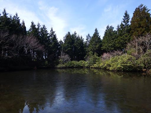 水舟の池2(薄氷)