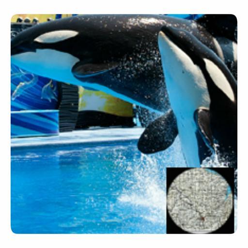 VR Guide: SeaWorld Orlando