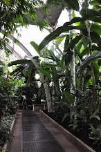 Photo: in Palmhouse Kew - Royal Botanical Gardens