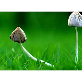 Beyond Limit by Manash Kaushik - Nature Up Close Mushrooms & Fungi