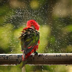 splash by Shikhei Goh II - Animals Birds