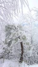 Photo: More snow