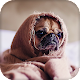 Pug Live Wallpaper : backgrounds hd APK