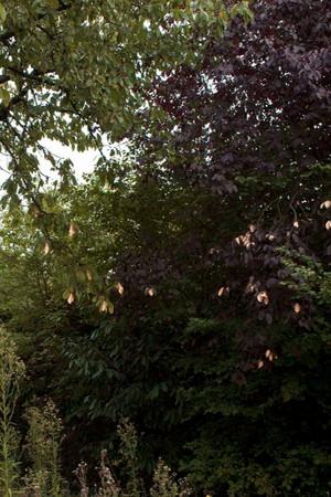flora vachez_09