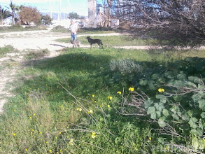 Photo: Gräs och andra växter når oss  opp till knäna 19 Dec