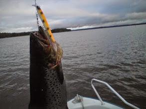 Photo: Taimen 2,0kg ja 100mm porkkana näsijärvi