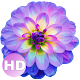 Flower wallpaper APK