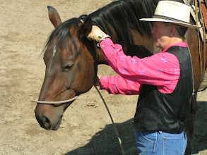Photo: Adjust so that the hondo is behind the jowels, and the loop is not too high on the nose, and not close to the eyes.