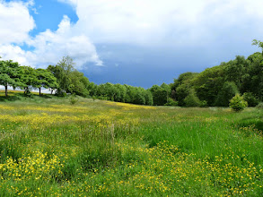 Photo: Small meadow.