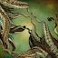 by Glenda Popielarski - Illustration Abstract & Patterns ( m3d, mandelbulb, abstract art, green, digital art, fractal art, mandelbulb 3d, raw fractal, mb3d, octopus, fractal, tentacles,  )