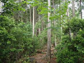 傾斜が緩みまた植林に