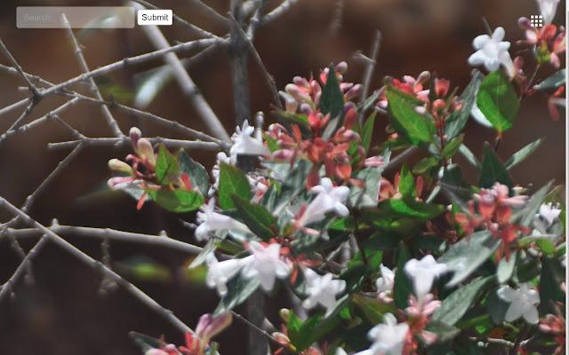 Flowers of Israel #1