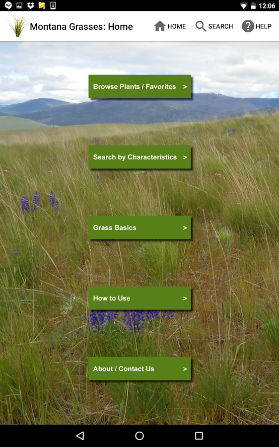 Montana Grasses- screenshot