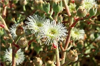 Photo: fiori del deserto