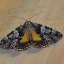 False underwing moth