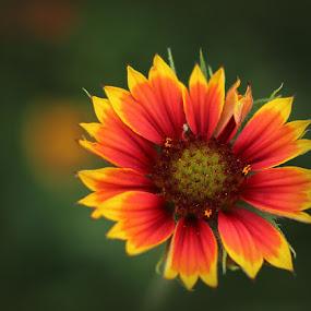 Shy by Stephanie Munguia-Wharry - Novices Only Flowers & Plants ( flower )