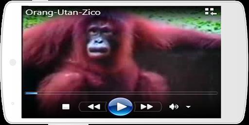 Video Lagu Anak Terbaru 8.0 screenshots 5