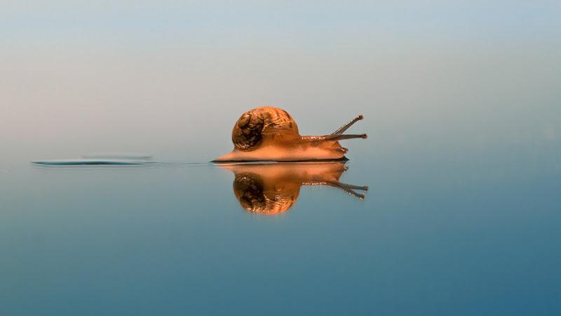 Snail / lianS di RobertaSilvestro