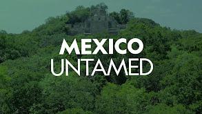 Mexico Untamed thumbnail