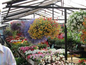 Photo: Markkinatorin kukkaloistoa.