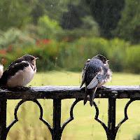 Waiting ... in the rain di