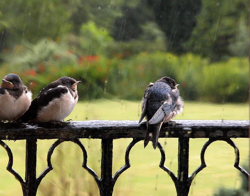 Waiting ... in the rain di danisca