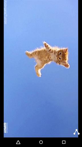 Kitten GIFs